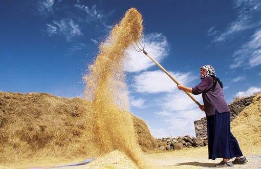 Buğdayda büyük kriz 2019'da yaşanacak