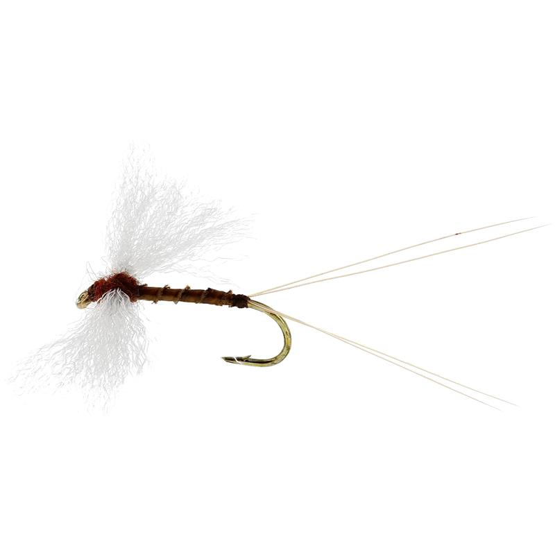 Marginata Spinner Biot Brown #12 TMC100
