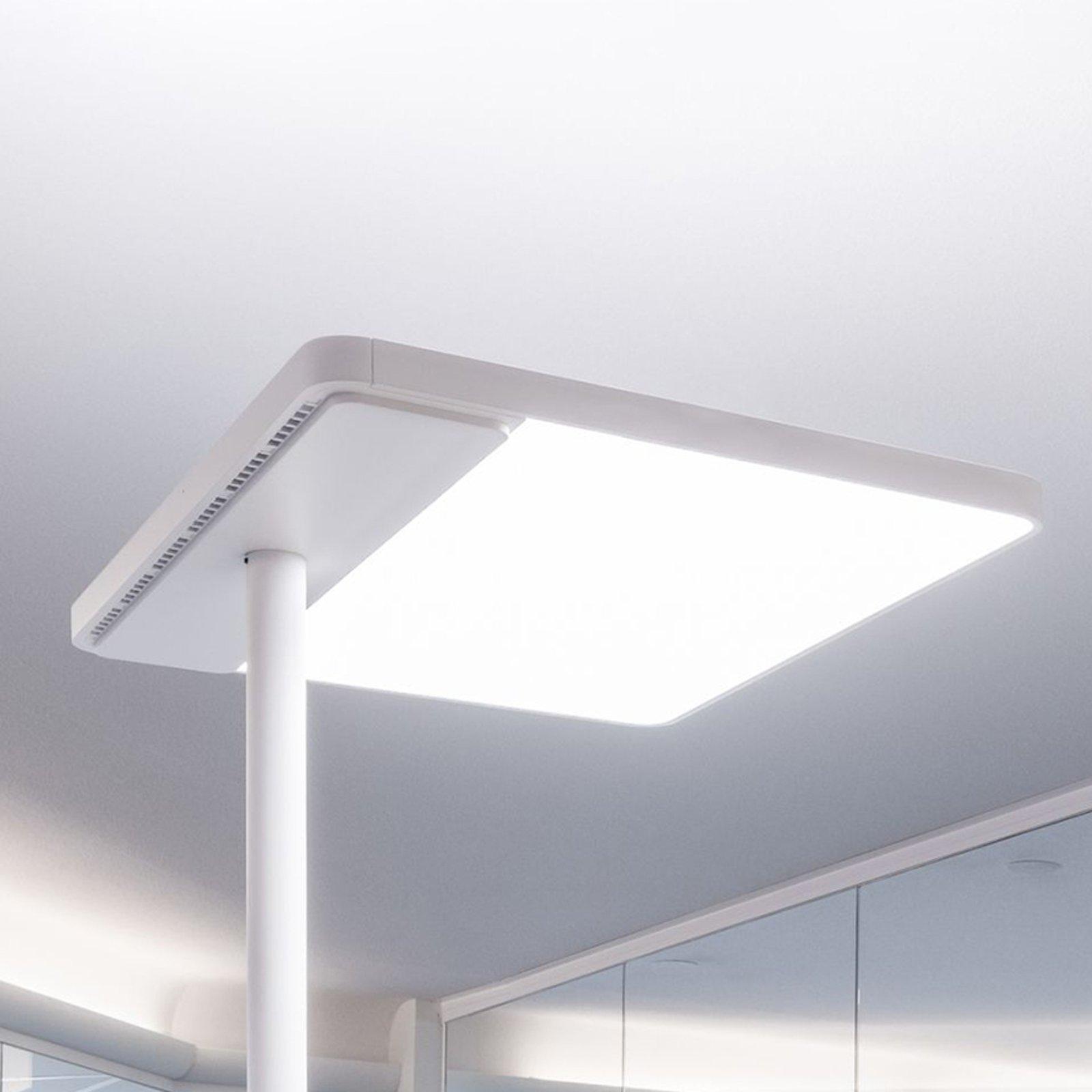Linea-F LED-gulvlampe til kontor, med tastedimmer
