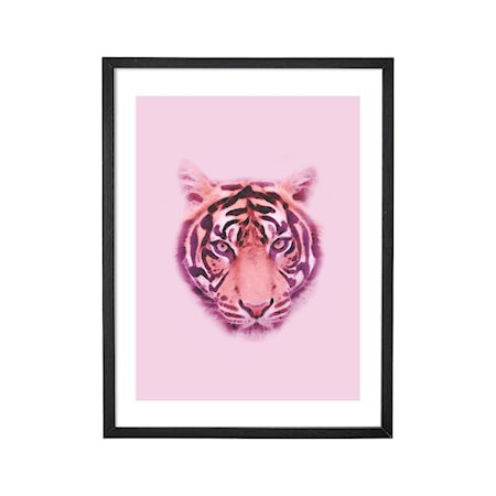 Poster Tiger med Ramme Svart