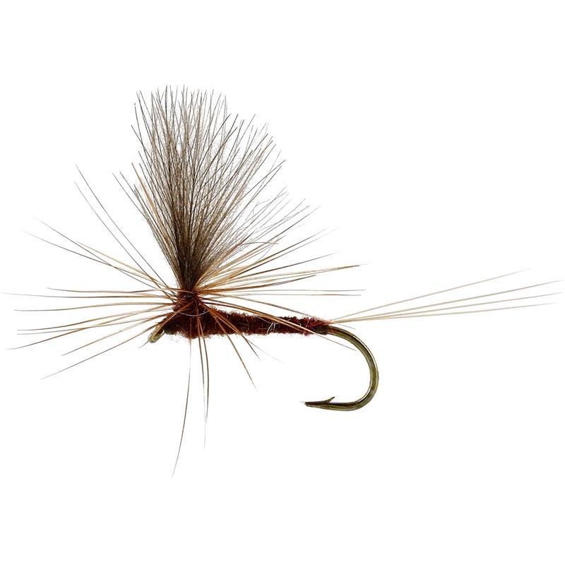Marginata Dun Brown #12 TMC100
