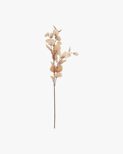 Tekokukka, Eucalyptus Suri