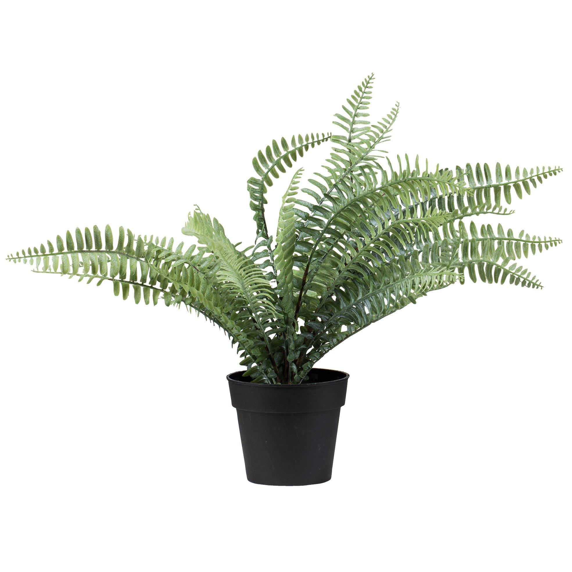 Plante Bregne