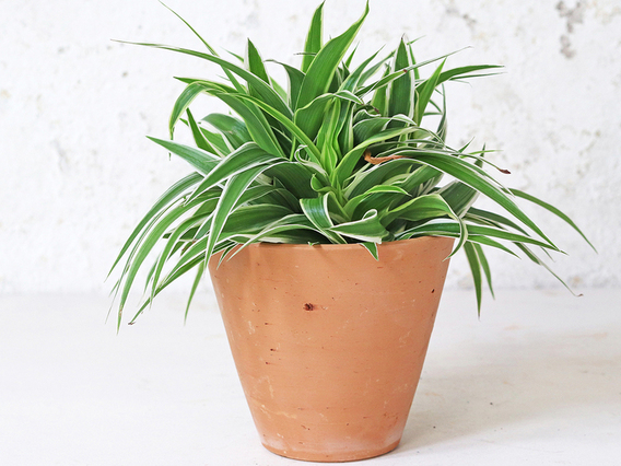Tapered Terracotta Plant Pot - Medium Medium