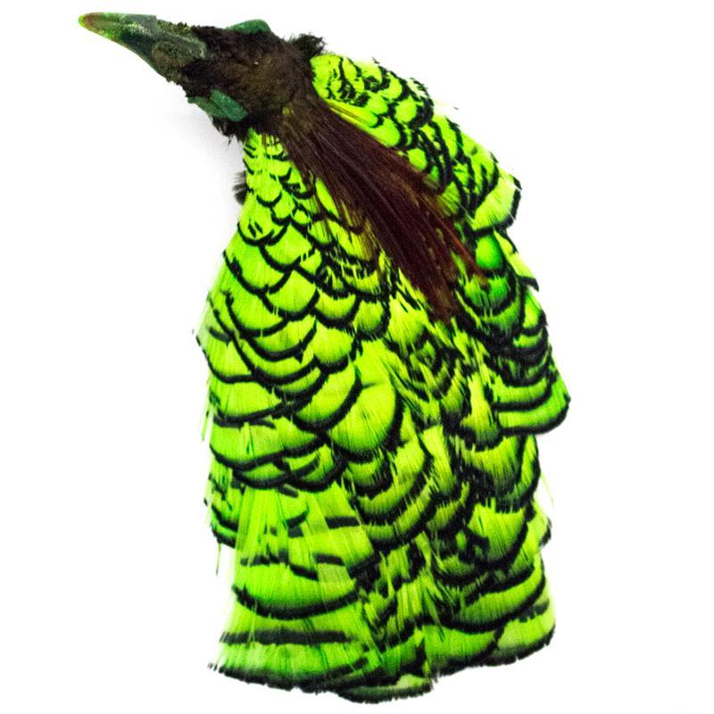 Amherst Pheasant Head No.2 - Dyed Lime Diamantfasan komplett hode
