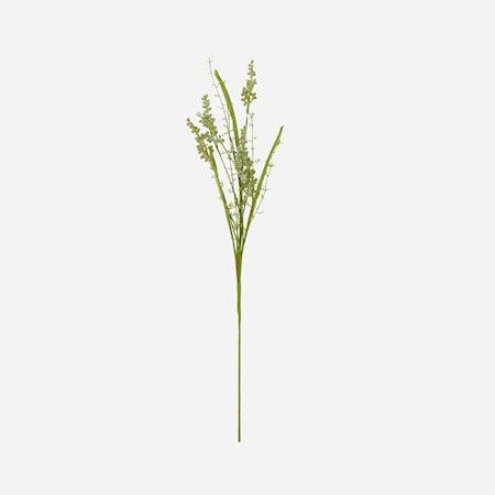 Gypsophila Hvit