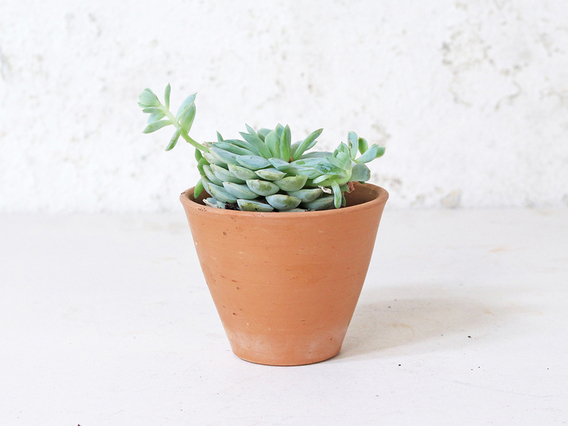 Tapered Terracotta Plant Pot - Small Small
