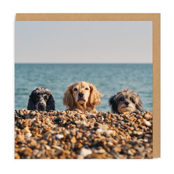 Three Beach Dogs Square Greeting Card