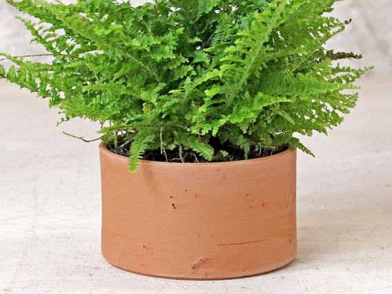 Low Cylinder Plant Pot
