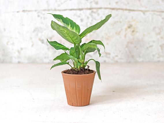 Fluted Terracotta Pot - Small