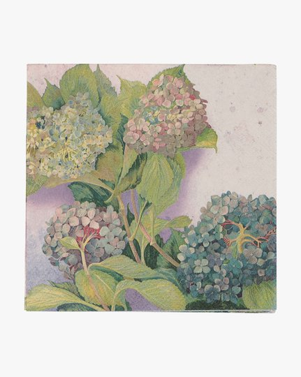 Paperiservetit, Hortensia