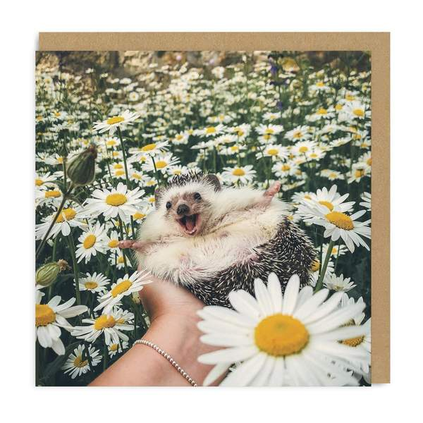 Hedgehog Daisy Field Square Greeting Card