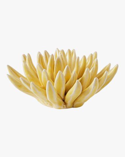 Koriste, Chrysantemum
