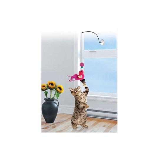 Kong Cat Connects Window Teaser