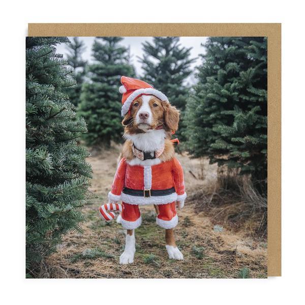 Maple Santa Square Christmas Card