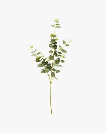 Tekokukka, Eucalyptus