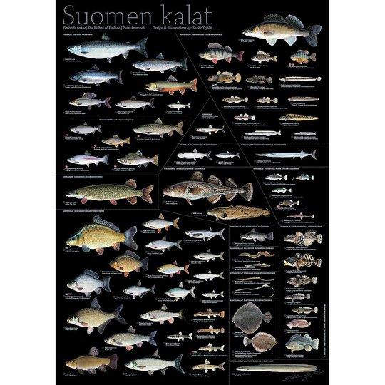 Sakke Yrjölä Finlands fiskar 50x70cm poster, svart