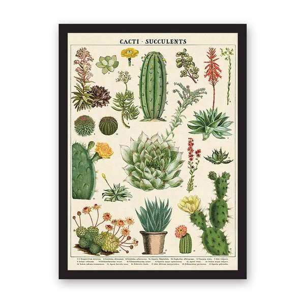 Cacti & Succulents Art Print Large