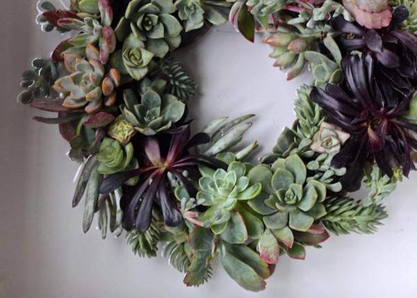 At Home: Succulent Wreath 1-2-1