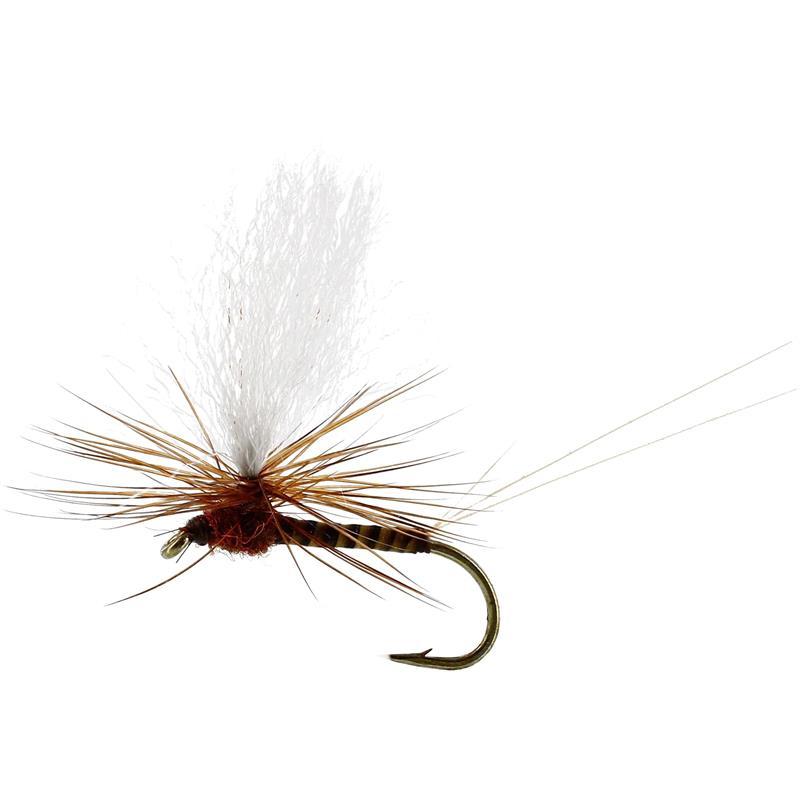 Marginata Dun Quill Brown #12 TMC100