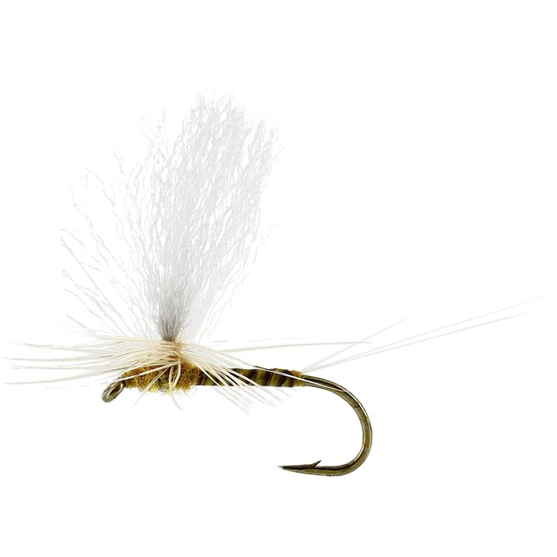 Sulphurea Dun Quill Yellow #14 TMC100