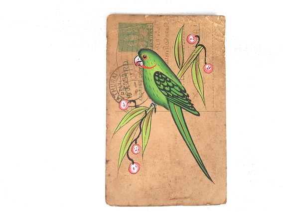Pretty Parrot Vintage Postcard Small