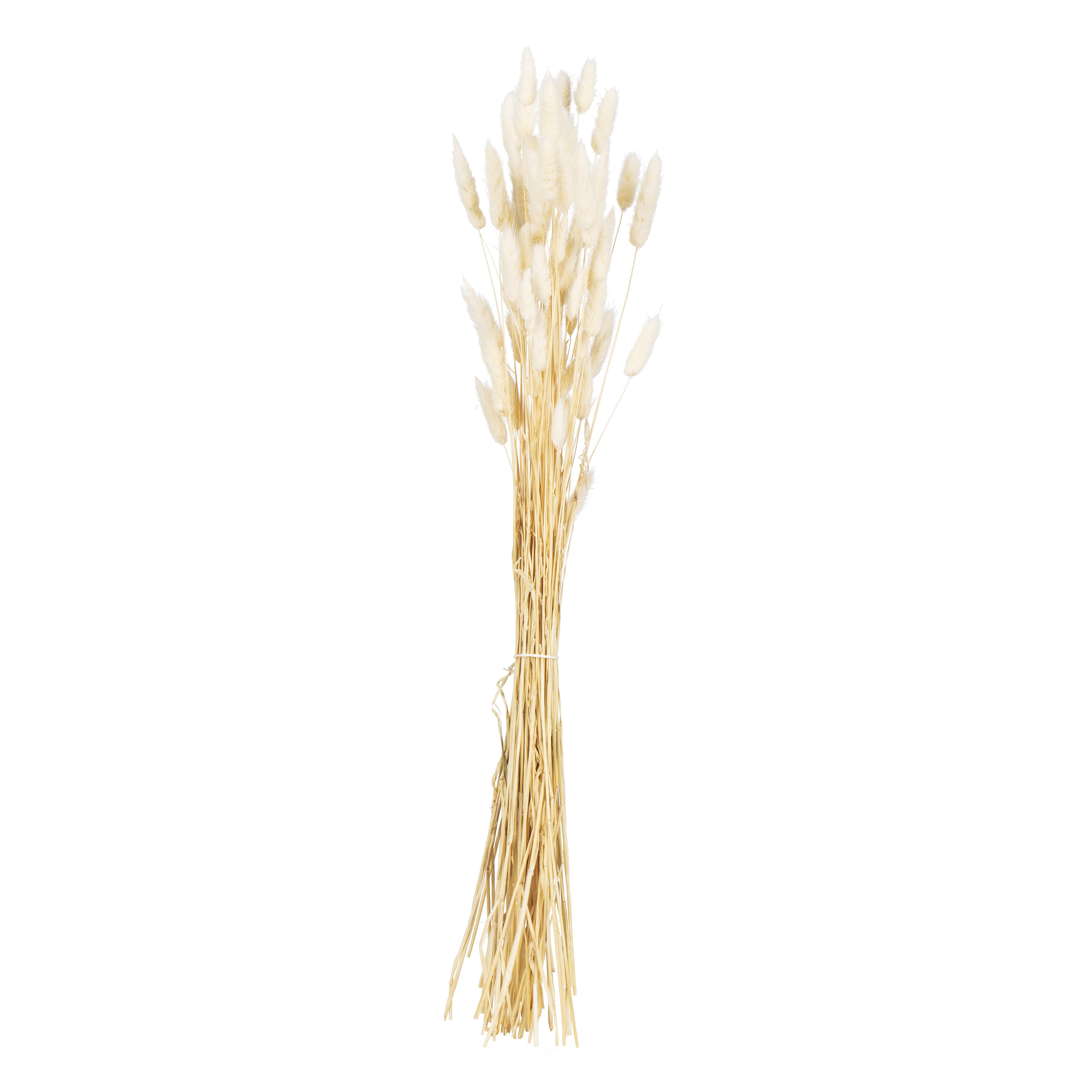 Strå Lagarus 45-50 cm hvit