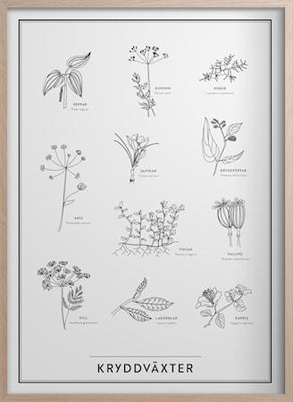 Kryddväxter Poster 50x70 cm