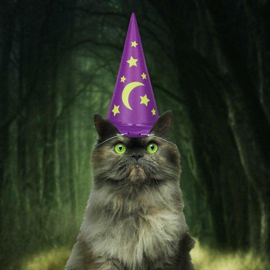 Trollkarlshatt till Katt - One size