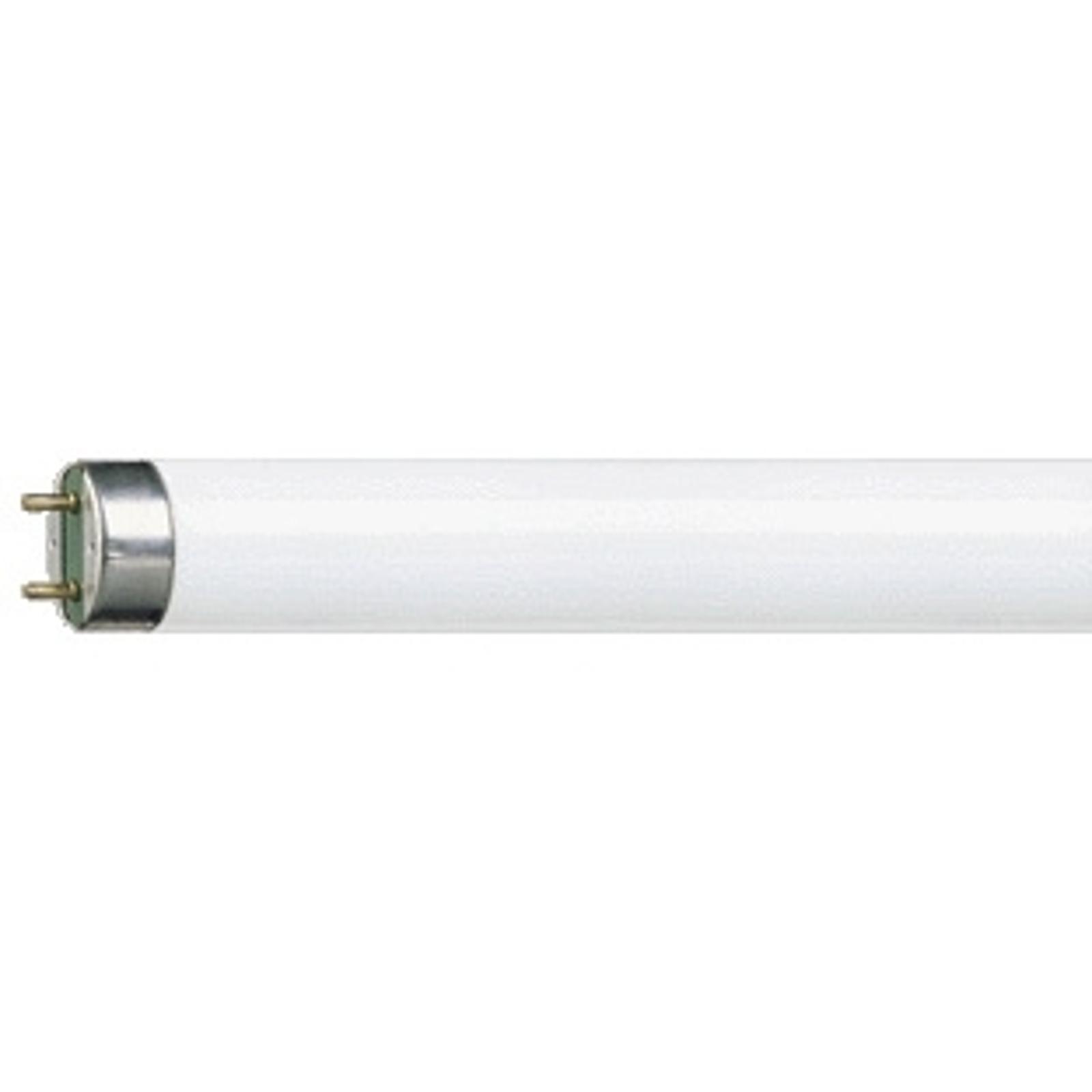G13 T8 15 W Loistelamppu MASTER TL-D Super 827