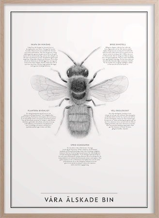 Våre elskede bier Poster 30x40 cm