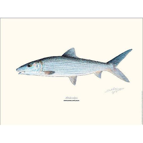 Bening Bonefish 30x40cm poster
