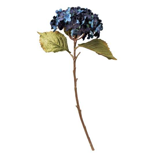 Blomst Hortensia Blå