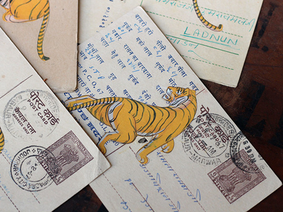 Hand-painted Vintage Indian Postcard - Terrible Tigers