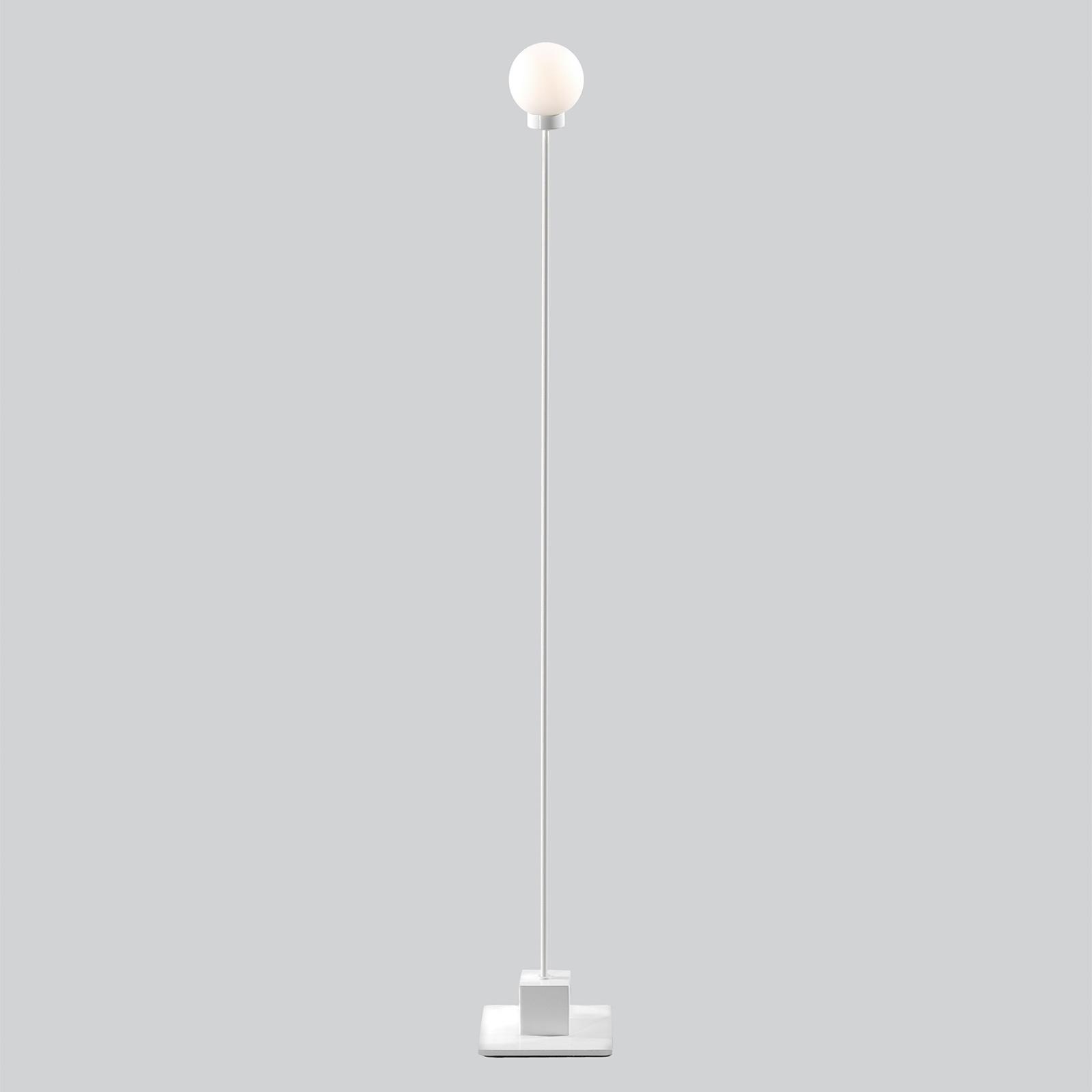 Northern Snowball lattiavalaisin, valkoinen