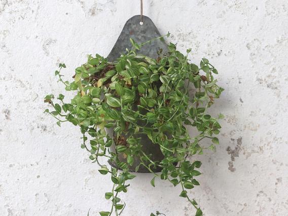 Wall Hanging Planter - Large