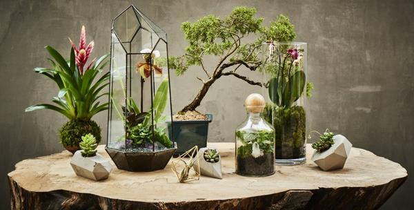 PRIVATE: Terrarium Design School for Two