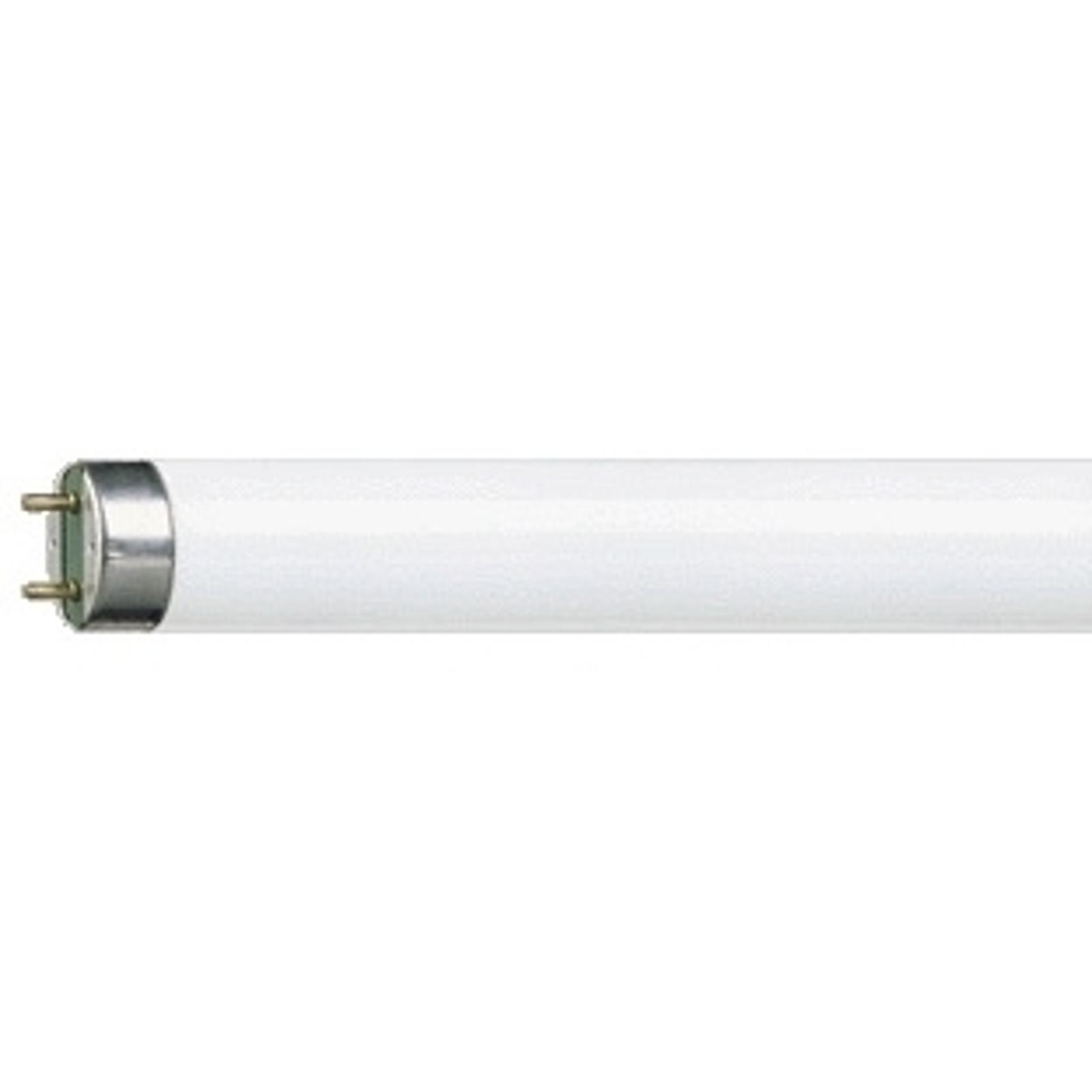 G13 T8 18 W Loistelamppu MASTER TL-D Super 830
