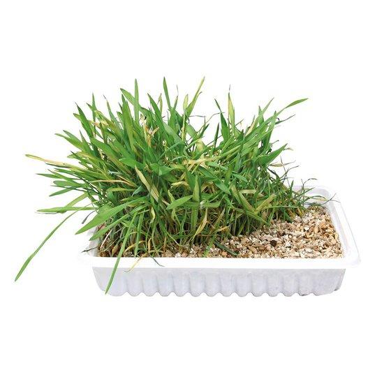 Trixie Kattgräs i Låda (100 grammaa)