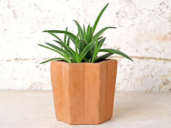 Terracotta Star Pot - Small