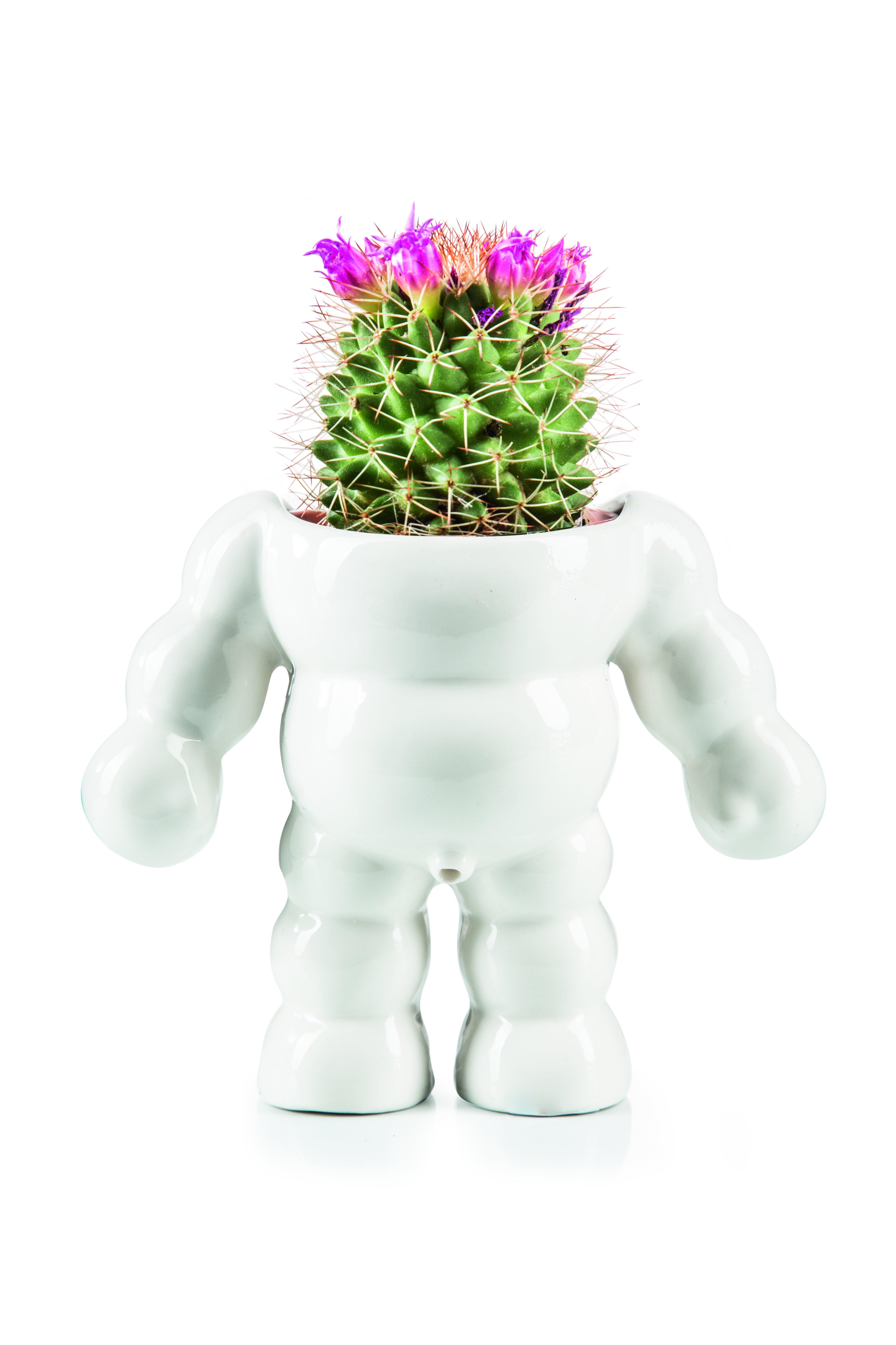 King Cactus - Plant Pot (210770)