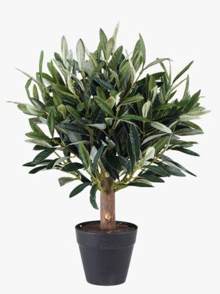 Oliventre liten viherkasvi vihreä