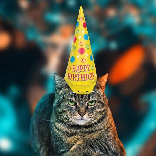 Partyhatt till Katt - One size
