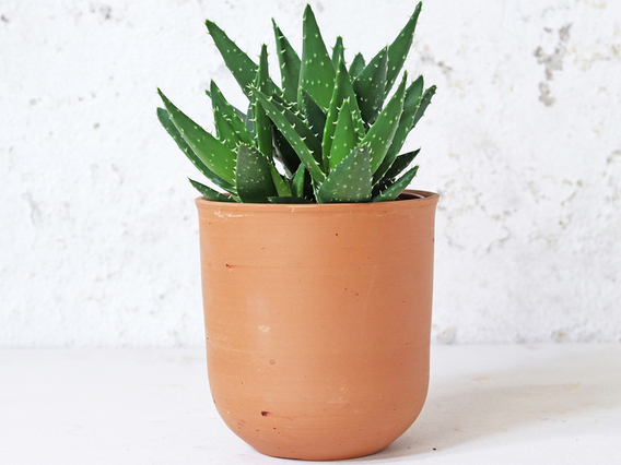 Curved Terracotta Plant Pot – Large Large