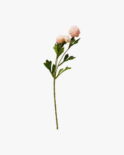 Ranunculus, Vaaleanaprikoosi, 12x40cm