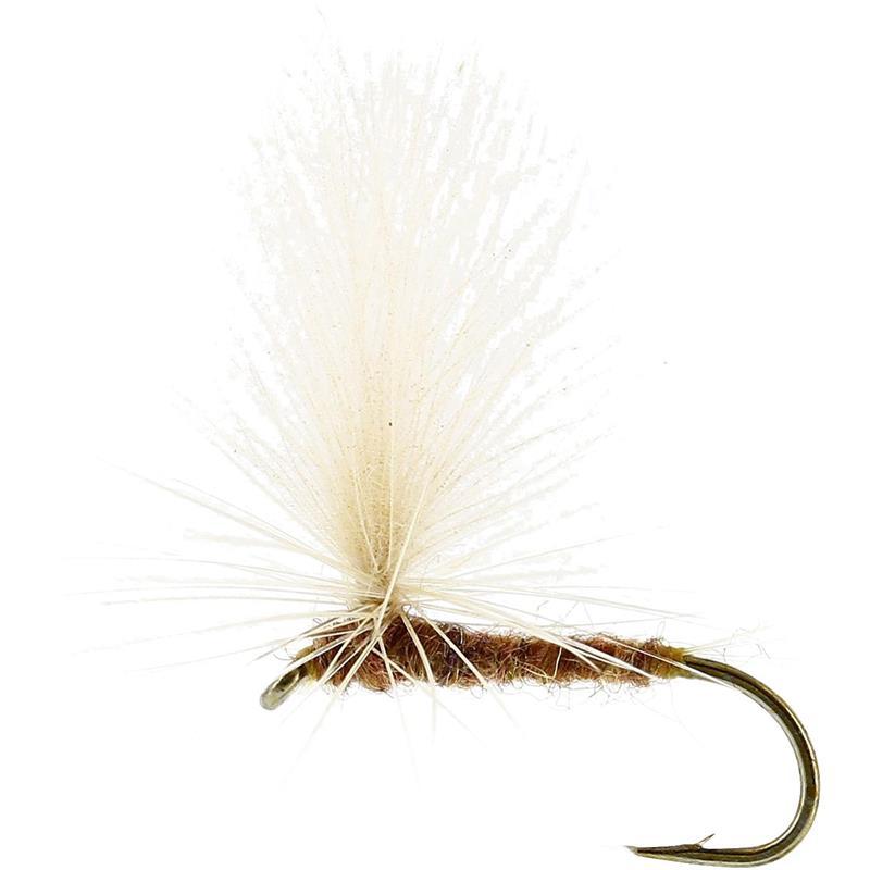 Aurivilli Dun Ginger #12 TMC100