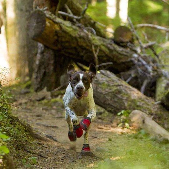 RuffWear Grip Trex Hundskor Röd 2-pack (76 mm)