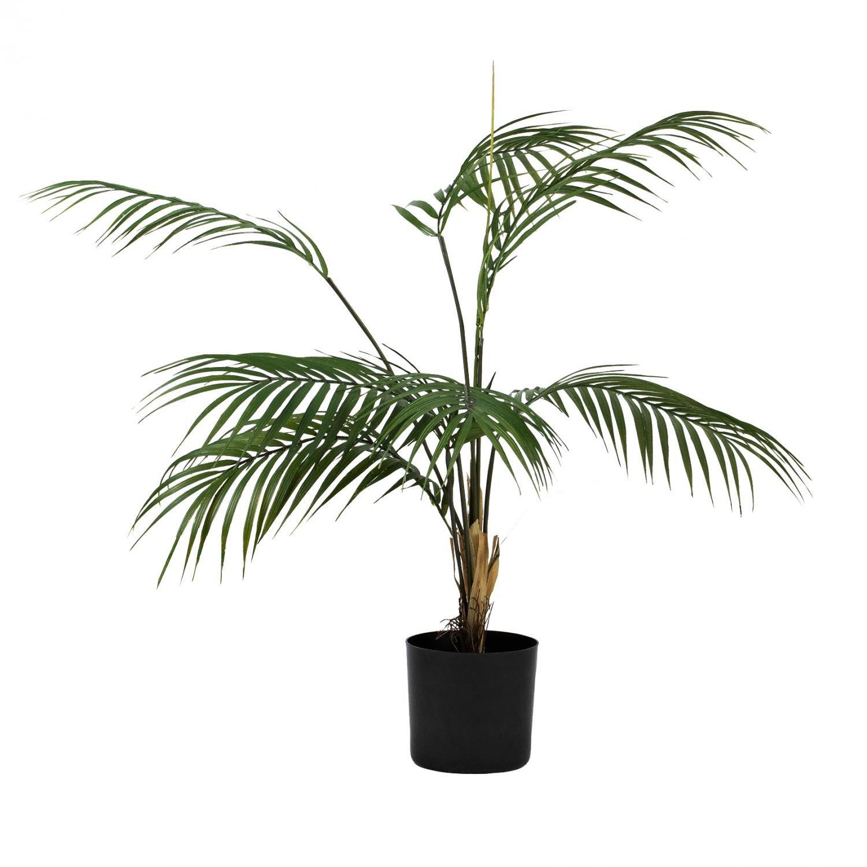Plante Palme liten