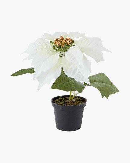 Julestjerne 18 Cm Flower, Valkoinen