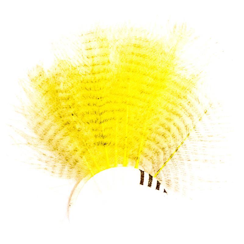 Barred CDC - Yellow Stripete cdc-fjær fra Veniard